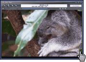 Скриншот JRiver Media Center 3